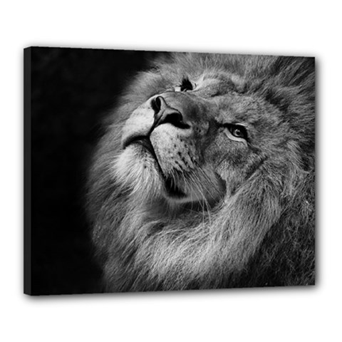 Feline Lion Tawny African Zoo Canvas 20  X 16