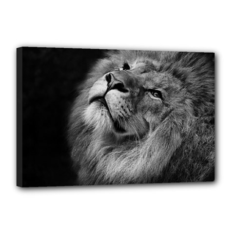 Feline Lion Tawny African Zoo Canvas 18  X 12