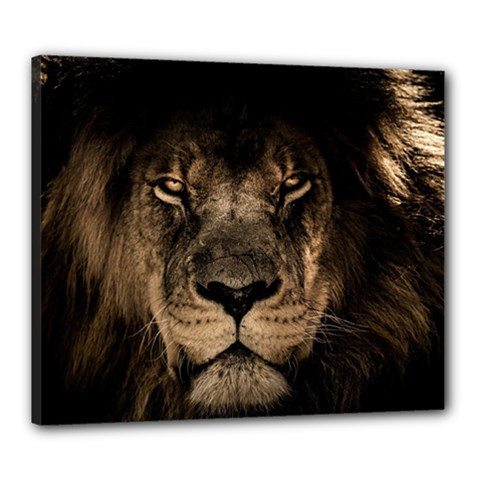 African Lion Mane Close Eyes Canvas 24  X 20