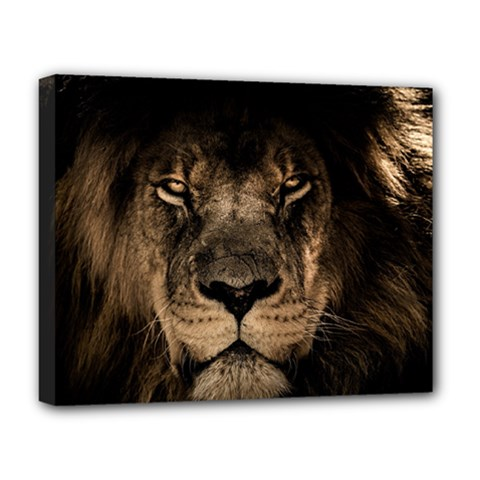 African Lion Mane Close Eyes Deluxe Canvas 20  X 16