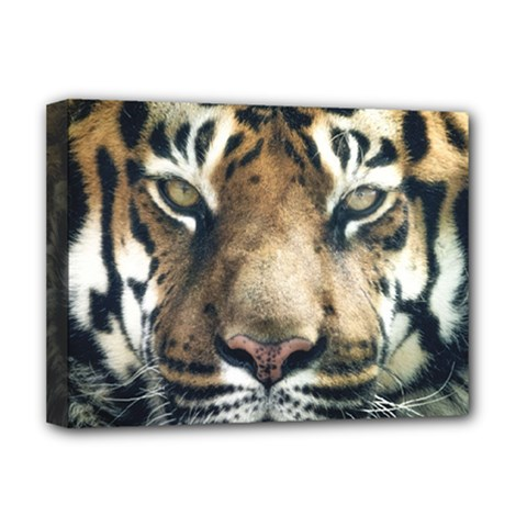 Tiger Bengal Stripes Eyes Close Deluxe Canvas 16  X 12