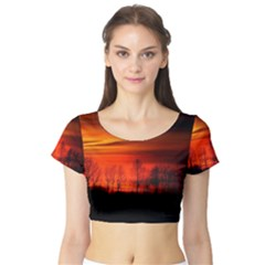 Tree Series Sun Orange Sunset Short Sleeve Crop Top