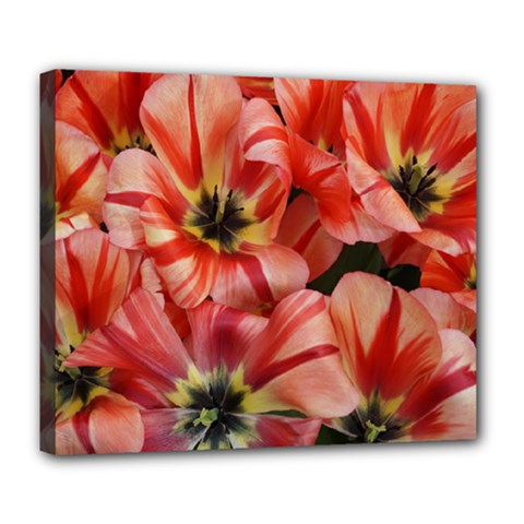 Tulips Flowers Spring Deluxe Canvas 24  X 20