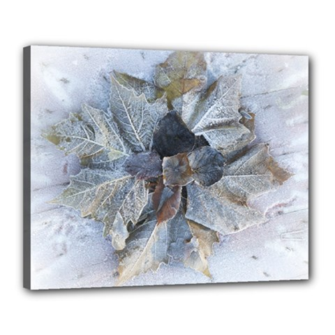Winter Frost Ice Sheet Leaves Canvas 20  X 16  by BangZart