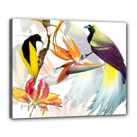 Birds Of Paradise Canvas 20  X 16  by TKKdesignsCo