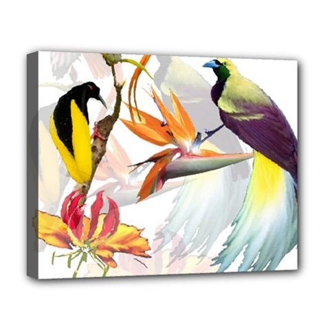 Birds Of Paradise Deluxe Canvas 20  X 16   by TKKdesignsCo