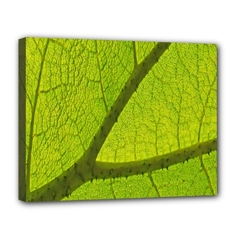 Green Leaf Plant Nature Structure Canvas 14  X 11  by Nexatart