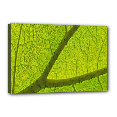 Green Leaf Plant Nature Structure Canvas 18  X 12