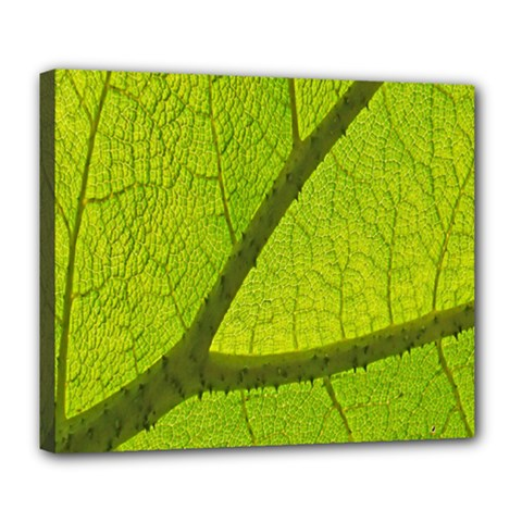Green Leaf Plant Nature Structure Deluxe Canvas 24  X 20