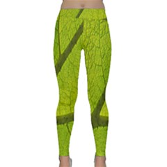 Green Leaf Plant Nature Structure Classic Yoga Leggings
