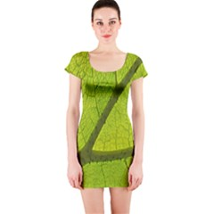 Green Leaf Plant Nature Structure Short Sleeve Bodycon Dress