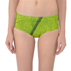 Green Leaf Plant Nature Structure Mid Waist Bikini Bottoms