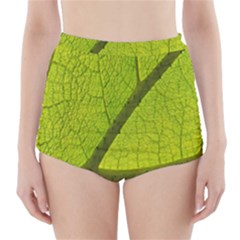Green Leaf Plant Nature Structure High Waisted Bikini Bottoms