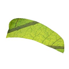 Green Leaf Plant Nature Structure Stretchable Headband