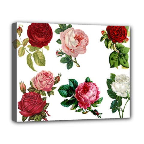 Roses 1770165 1920 Deluxe Canvas 20  X 16   by vintage2030