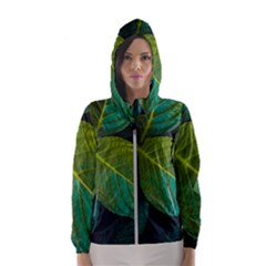 Green Plant Leaf Foliage Nature Hooded Wind Breaker (women)