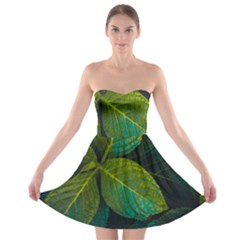 Green Plant Leaf Foliage Nature Strapless Bra Top Dress