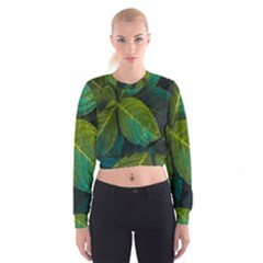 Green Plant Leaf Foliage Nature Cropped Sweatshirt