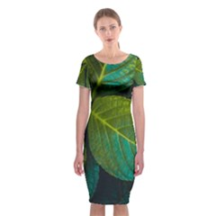 Green Plant Leaf Foliage Nature Classic Short Sleeve Midi Dress