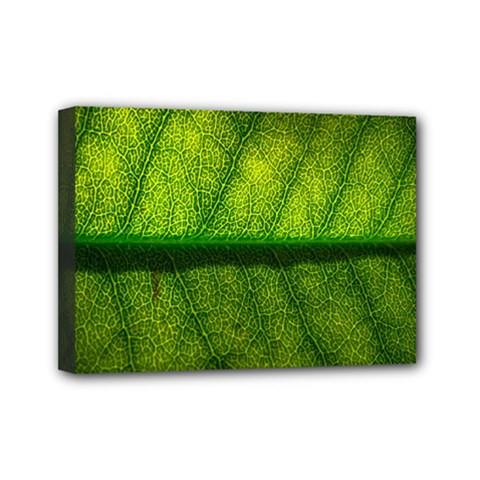 Leaf Nature Green The Leaves Mini Canvas 7  X 5  by Nexatart