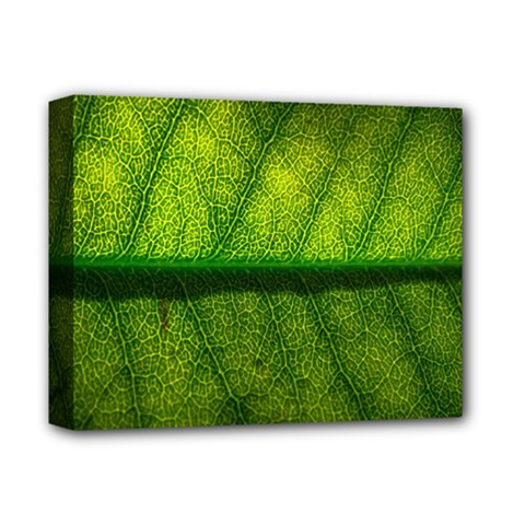 Leaf Nature Green The Leaves Deluxe Canvas 14  X 11