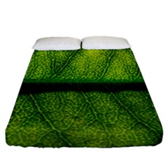 Leaf Nature Green The Leaves Fitted Sheet (queen Size) by Nexatart