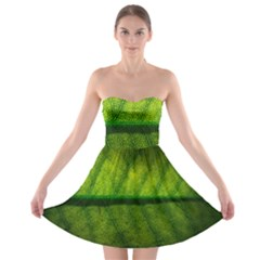 Leaf Nature Green The Leaves Strapless Bra Top Dress