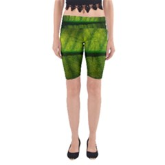 Leaf Nature Green The Leaves Yoga Cropped Leggings