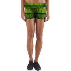 Leaf Nature Green The Leaves Yoga Shorts