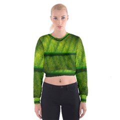 Leaf Nature Green The Leaves Cropped Sweatshirt