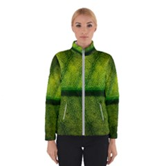 Leaf Nature Green The Leaves Winterwear