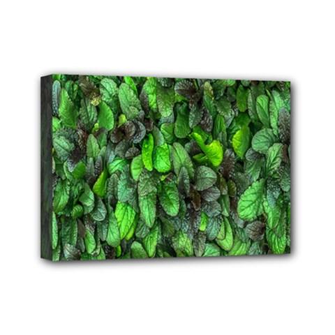 The Leaves Plants Hwalyeob Nature Mini Canvas 7  X 5