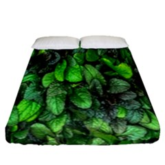The Leaves Plants Hwalyeob Nature Fitted Sheet (queen Size) by Nexatart