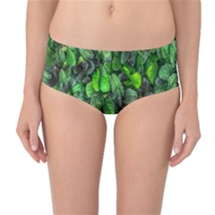 The Leaves Plants Hwalyeob Nature Mid Waist Bikini Bottoms