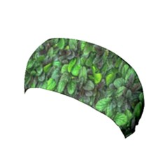 The Leaves Plants Hwalyeob Nature Yoga Headband