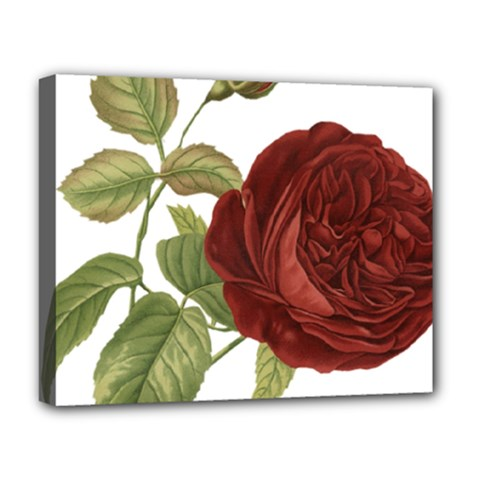 Rose 1077964 1280 Deluxe Canvas 20  X 16   by vintage2030