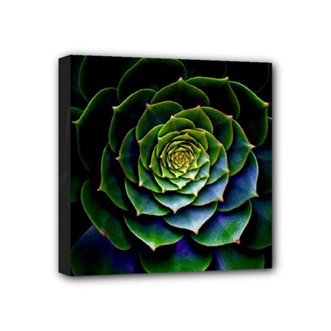 Nature Desktop Flora Color Pattern Mini Canvas 4  X 4