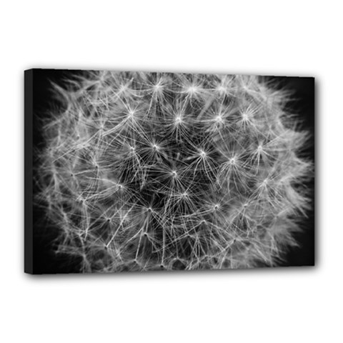 Dandelion Fibonacci Abstract Flower Canvas 18  X 12