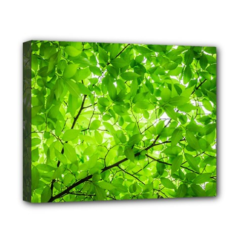 Green Wood The Leaves Twig Leaf Texture Canvas 10  X 8