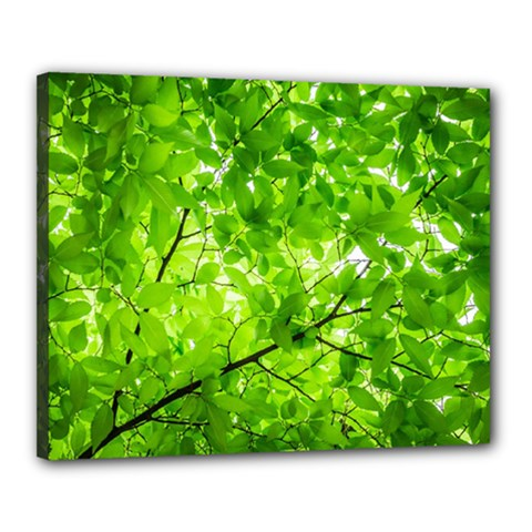 Green Wood The Leaves Twig Leaf Texture Canvas 20  X 16