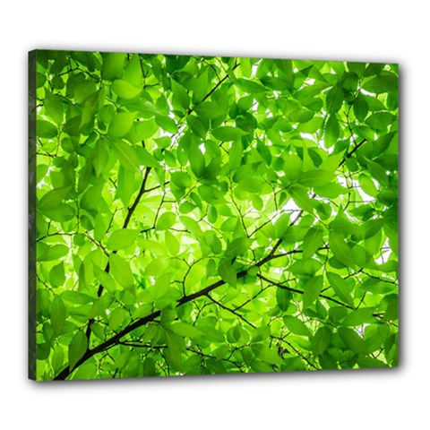 Green Wood The Leaves Twig Leaf Texture Canvas 24  X 20