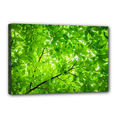 Green Wood The Leaves Twig Leaf Texture Canvas 18  X 12  by Nexatart