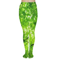 Green Wood The Leaves Twig Leaf Texture Women s Tights
