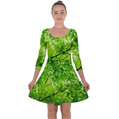 Green Wood The Leaves Twig Leaf Texture Quarter Sleeve Skater Dress