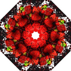 Strawberry Fruit Food Art Abstract Hook Handle Umbrellas (small)