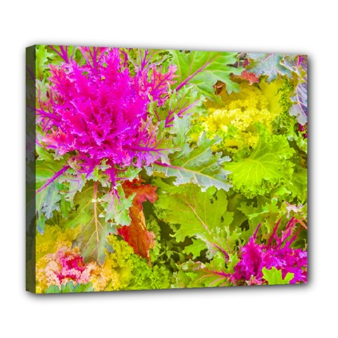 Colored Plants Photo Deluxe Canvas 24  X 20   by dflcprints