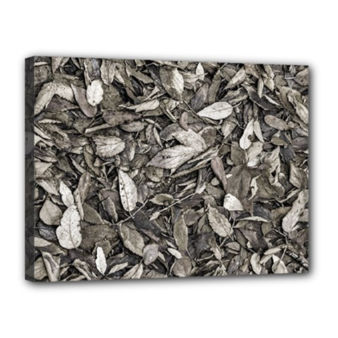 Black And White Leaves Pattern Canvas 16  X 12  by dflcprints