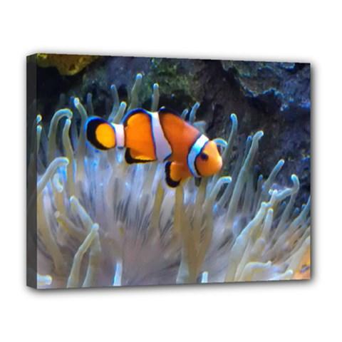 Clownfish 2 Canvas 14  X 11  by trendistuff