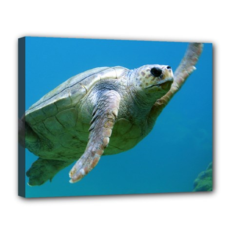 Sea Turtle 2 Canvas 14  X 11