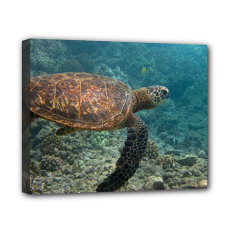 Sea Turtle 3 Canvas 10  X 8  by trendistuff